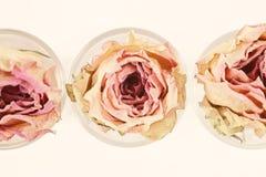 3 высушенных розы цветка Стоковое Изображение RF