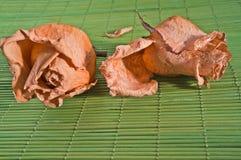 2 высушенных розы Стоковые Фотографии RF