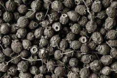 высушено - боярышник плодоовощ стоковая фотография rf