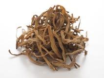 Высушено daylily стоковые изображения