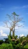 Высушите вал с голубым небом Стоковые Фото
