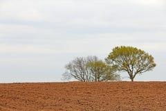 Высушите вспаханный аграрный край земли Стоковая Фотография
