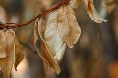 Высушите вянуть листья, высушенные листья Стоковые Фотографии RF