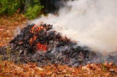 Высушите гореть листьев Стоковое Изображение