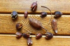 Высушите жолуди на стойке Стоковое Изображение