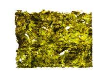 Высушите зажаренную в духовке морскую водоросль изолированную на белизне Стоковая Фотография RF