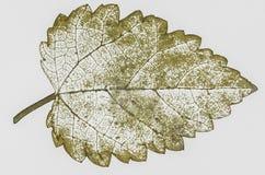 высушите изолированные листья Стоковая Фотография