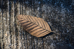 Высушите листья которые падают на пол Стоковая Фотография