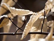 Высушите листья на ветви в солнечном свете Стоковые Фото