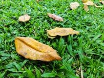 Высушите листья на зеленой траве Стоковое фото RF