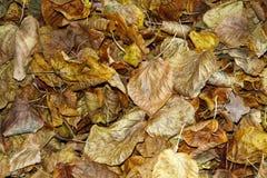 Высушите листья на дороге стоковые фотографии rf