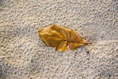 Высушите листья на песке Стоковая Фотография RF