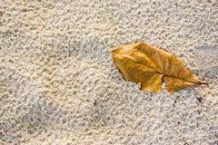 Высушите листья на песке Стоковые Изображения RF