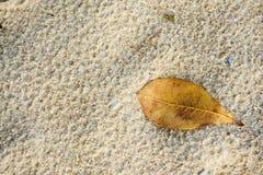 Высушите листья на песке Стоковые Фото
