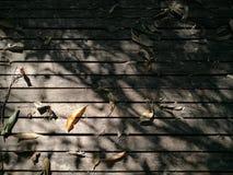 Высушите листья падая в утро на деревянном поле Стоковое Фото
