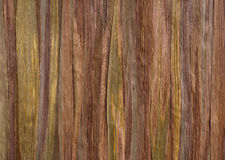 Высушите листья тростника Стоковые Фотографии RF