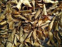 Высушите листья Стоковые Изображения RF