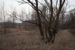 Высушите коричневые деревья осени в последнем лесе evenig Стоковые Изображения RF
