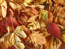 высушите кучу листьев Стоковые Изображения RF