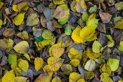 Высушите листья в парке Стоковые Изображения
