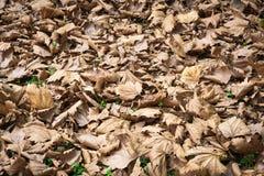 Высушите листья на парке в осени стоковая фотография