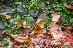 Высушите листья среди камней и мха стоковая фотография
