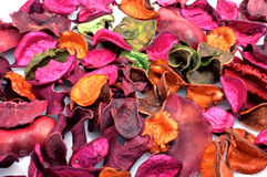 высушите листья стоковые фото