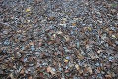 высушите листья Стоковые Изображения