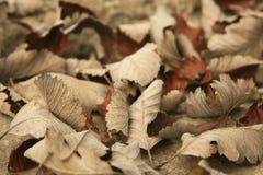 высушите листья Стоковая Фотография RF
