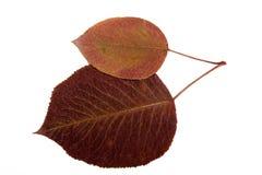 высушите листья Стоковые Фотографии RF