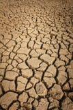 Высушите на земле Стоковое Фото