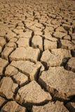 Высушите на земле Стоковое фото RF