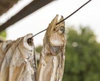 Высушите посоленных рыб outdoors Стоковые Фотографии RF