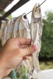 Высушите посоленных рыб outdoors Стоковая Фотография