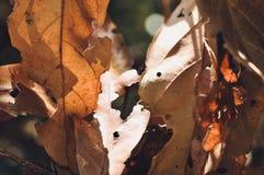 Высушите предпосылку в тропическом саде, текстуру листьев зеленых листьев Стоковое фото RF