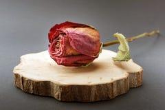 Высушите розовую и кусок дерева на черной предпосылке стоковое фото rf