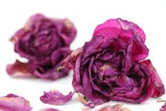 высушите розовую Стоковые Фото