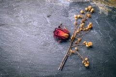 Высушите розовый цветок на камне Стоковая Фотография RF
