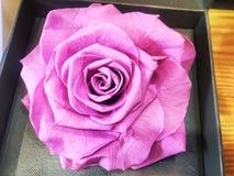 Высушите розовый цветок Стоковое Фото