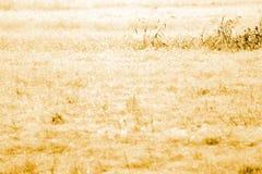 высушите траву поля Стоковые Фото