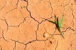 Высушите треснутую землю заполняя рамку Стоковые Изображения