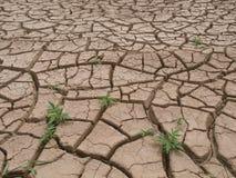 Высушите треснутую землю Стоковое Изображение RF