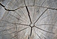 Высушите треснутую древесину стоковое фото