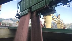 Высыпание зерна от автомобиля в владение tan Стоковая Фотография