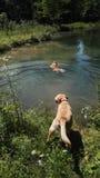 Выслеживает playin в озере Стоковые Изображения