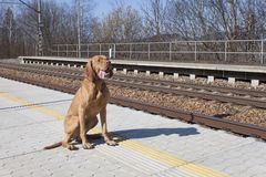 Выследите ждать его мастера к сельской станции, весеннему дню Стоковое фото RF