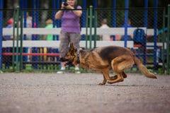 Выследите конкуренцию, тренировку полицейской собаки, собак резвитесь Стоковое Фото