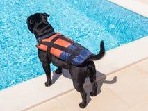 Выследите носить спасательный жилет стороной бассейна Стоковое Фото