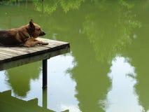 Выследите ослаблять на деревянном мосте, смотря озеро Стоковые Изображения