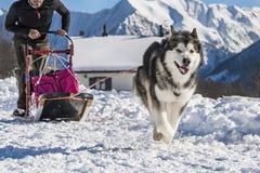 выследите село таблицы скелетона Польши pasterka musher гор собак малое стоковая фотография